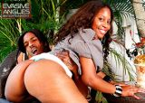 evasive angles inc best in black porn big asses black girls and